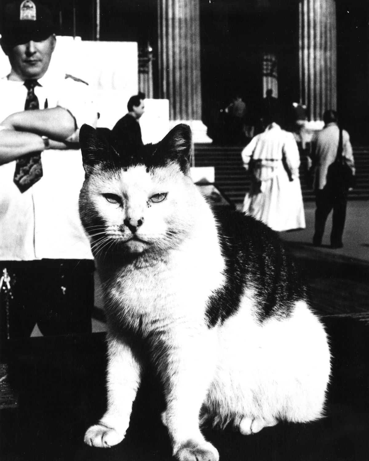 The purrrplexing story of the British Museum cats The