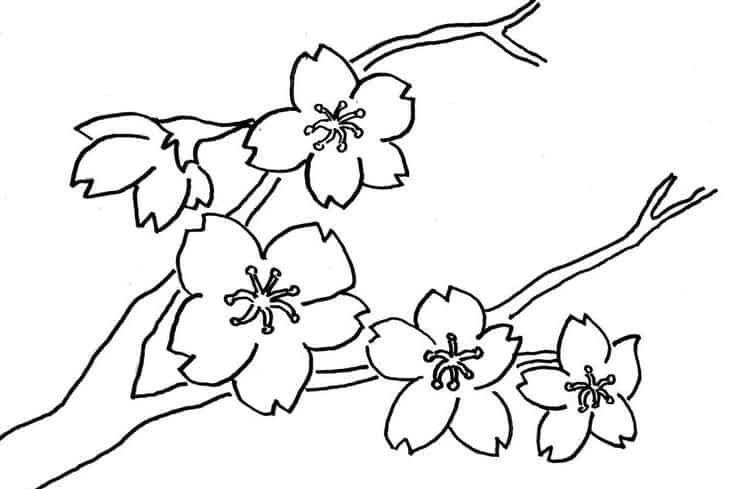 33 Sketsa Pemandangan Bunga Sakura Lukisan Bunga Hitam Putih Yang Mudah Ditiru Cikimm Com Download 85 Sketsa Bunga Saku Di 2020 Bunga Sakura Lukisan Bunga Sketsa