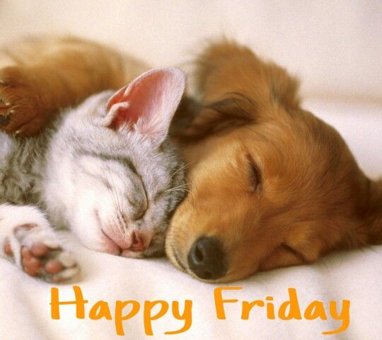 happy friday cat and dog sleeping together so cute