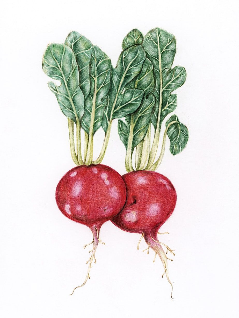 Hand drawn vegetables collection free image by rawpixel com
