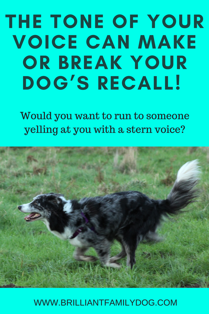 The Tone Of Your Voice Can Make Or Break Your Dog S Recall