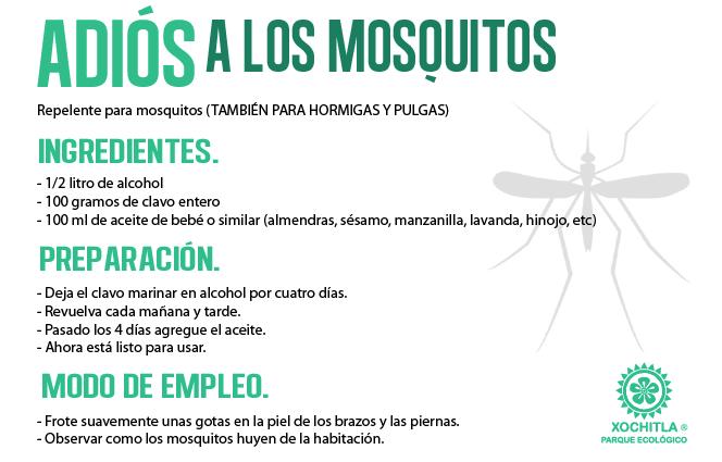Remedios caseros contra los mosquitos pl bichos - Como ahuyentar los mosquitos ...