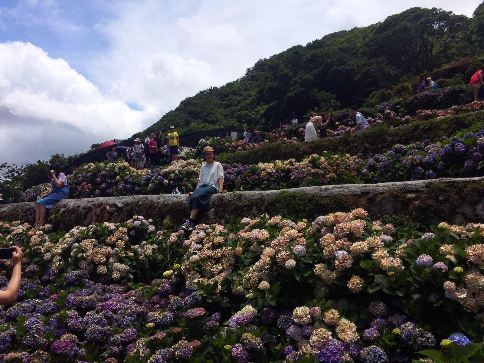 Yang Ming Shan Hydrangeas Farm Asia Travel Taiwan Travel National Parks