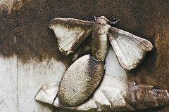 Metamorphosis Michael Hamburg69 Tags Italien Italy Sculpture Friedhof Cemetery Florence Italia Skulptur Tuscany Firenze Falter T Friedhof Toskana Skulpturen