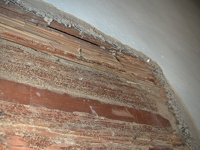 Pin By Ameritech Pest Control On Termite Damage Dallas Fort Worth Termite Damage Termites Signs Of Termites