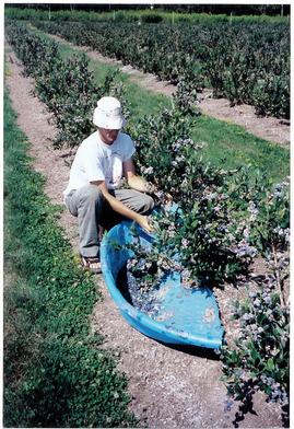 Bayfield Farm Jobs Job and Internship Postings in 2020