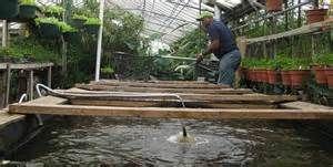 Fish Grown on Fish Farms
