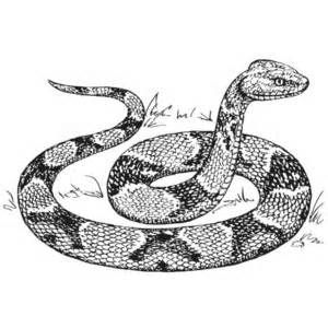 Coloring Page Copperhead Snake Polyvore