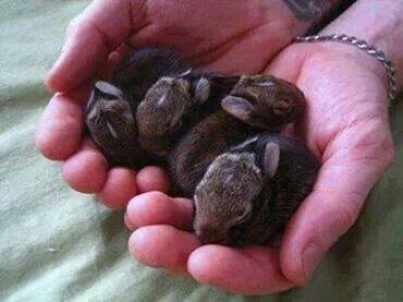 Baby bunnies in a group called a fluffle!