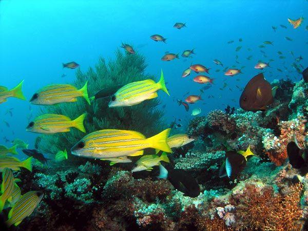 Ambiente-Maldivas-(pargos)
