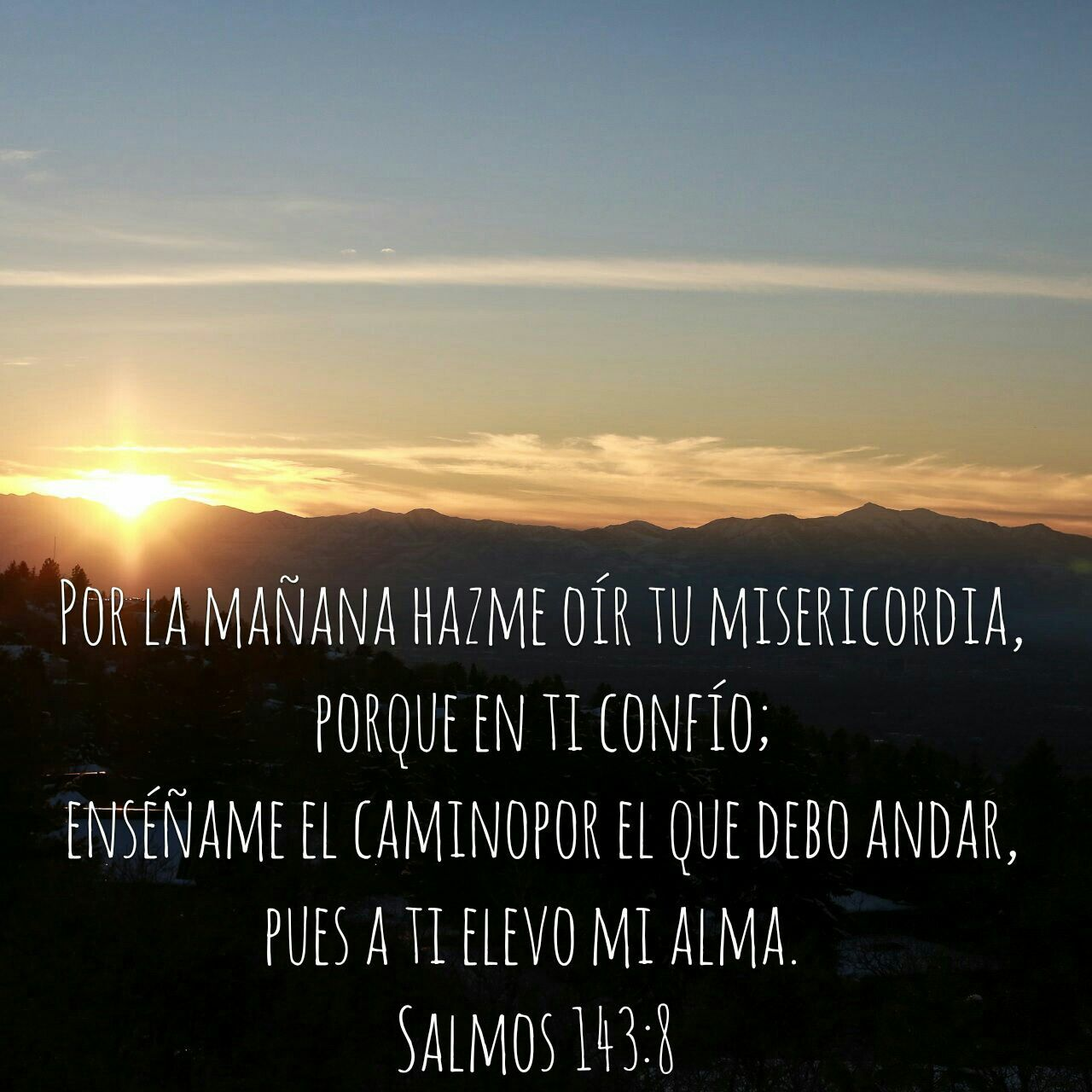 Por La Mañana Salmos 143 8 Salmos Versículos