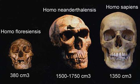 Prominent Hominid Fossils
