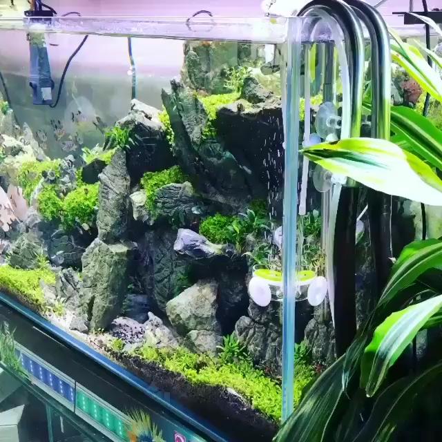 Stunning Tank Aquarium Videos Video In 2020 Aquarium Landscape Aquarium Fresh Water Fish Tank