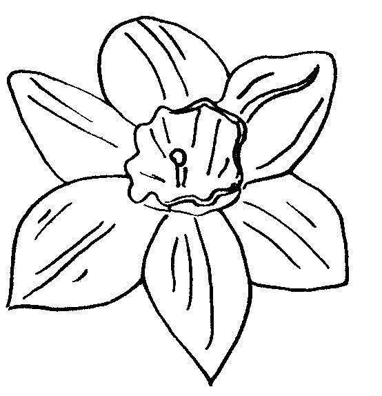 flowers 27 daffodil embroidery pattern pinterest flowers