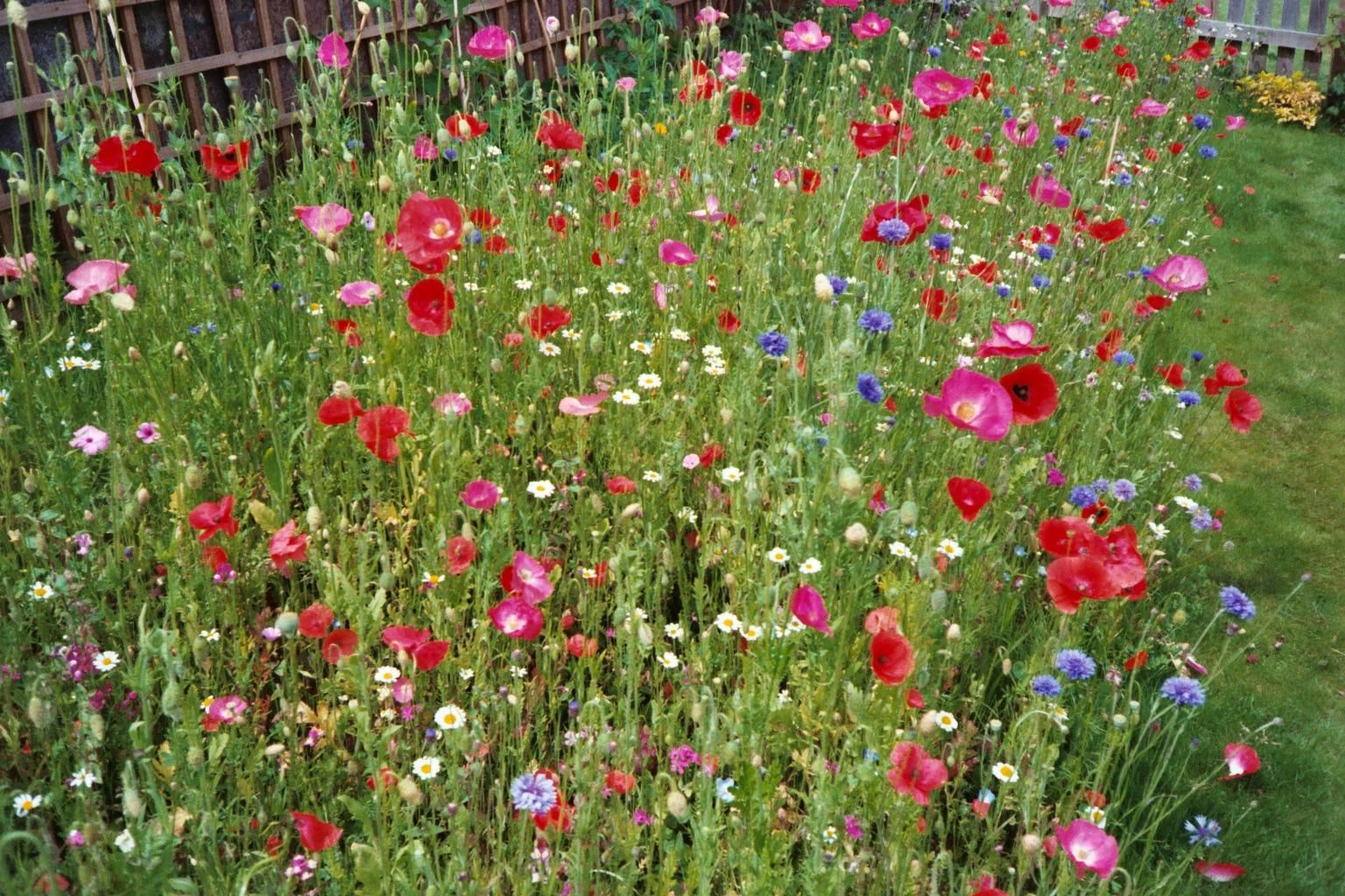 Create A Wild Flower Meadow | Just Another WordPress Site
