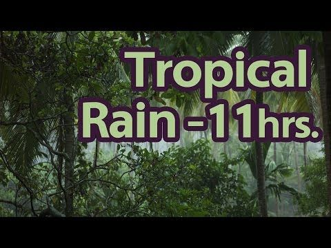 11 Hours Tropical Rain Sounds Of Nature 1 Of 59 Pure Nature Sounds Youtube Nature Sounds Nature Music Sound Of Rain
