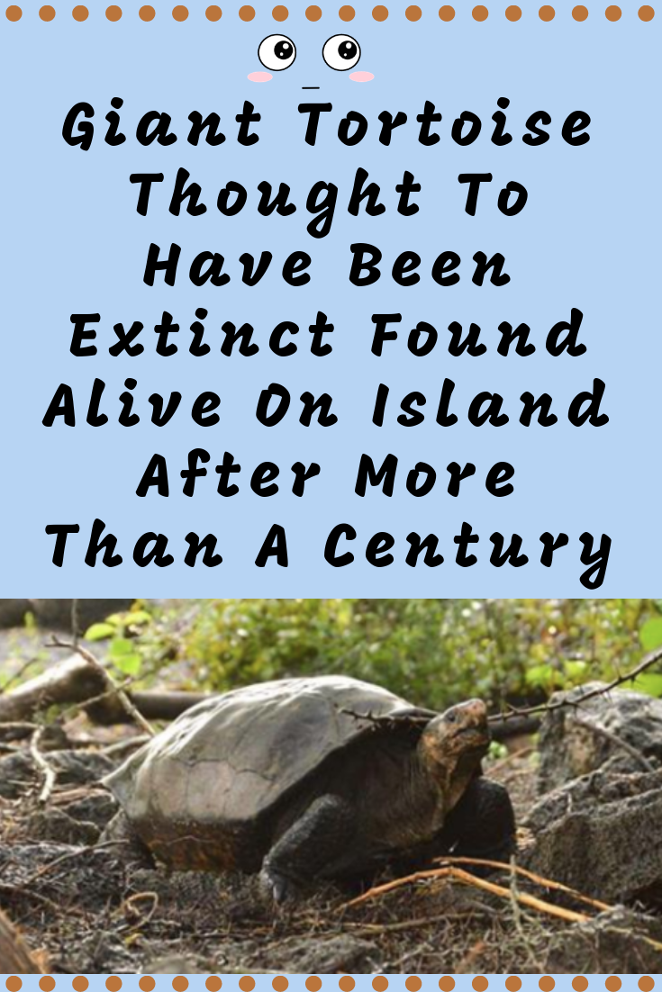 Giant Tortoise Thought To Have Been Extinct Found Alive On