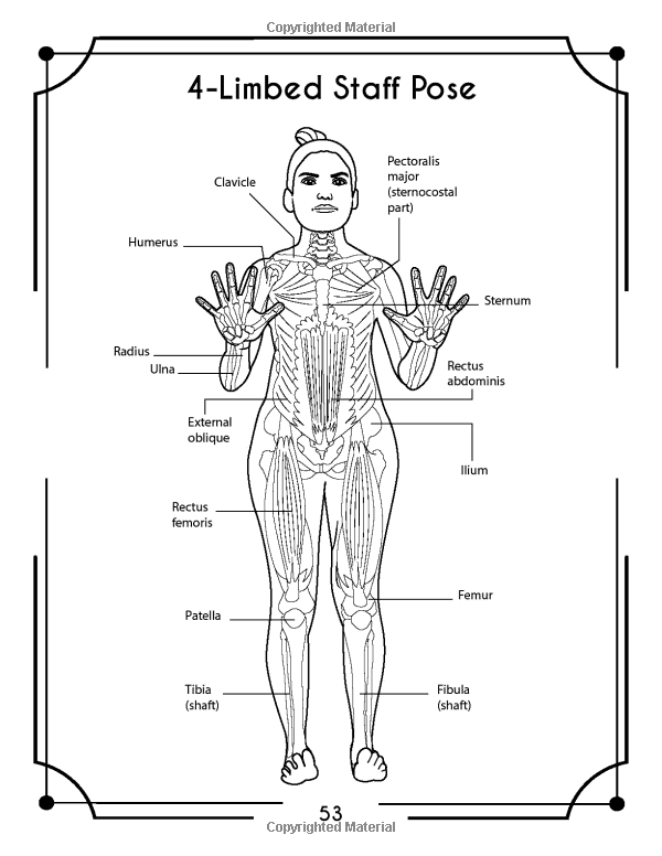 Yoga Anatomy Coloring Book A New View At Yoga Poses Elizabeth J Rochester 9781073535859 Amazon Com Book Anatomy Coloring Book Coloring Books Yoga Anatomy