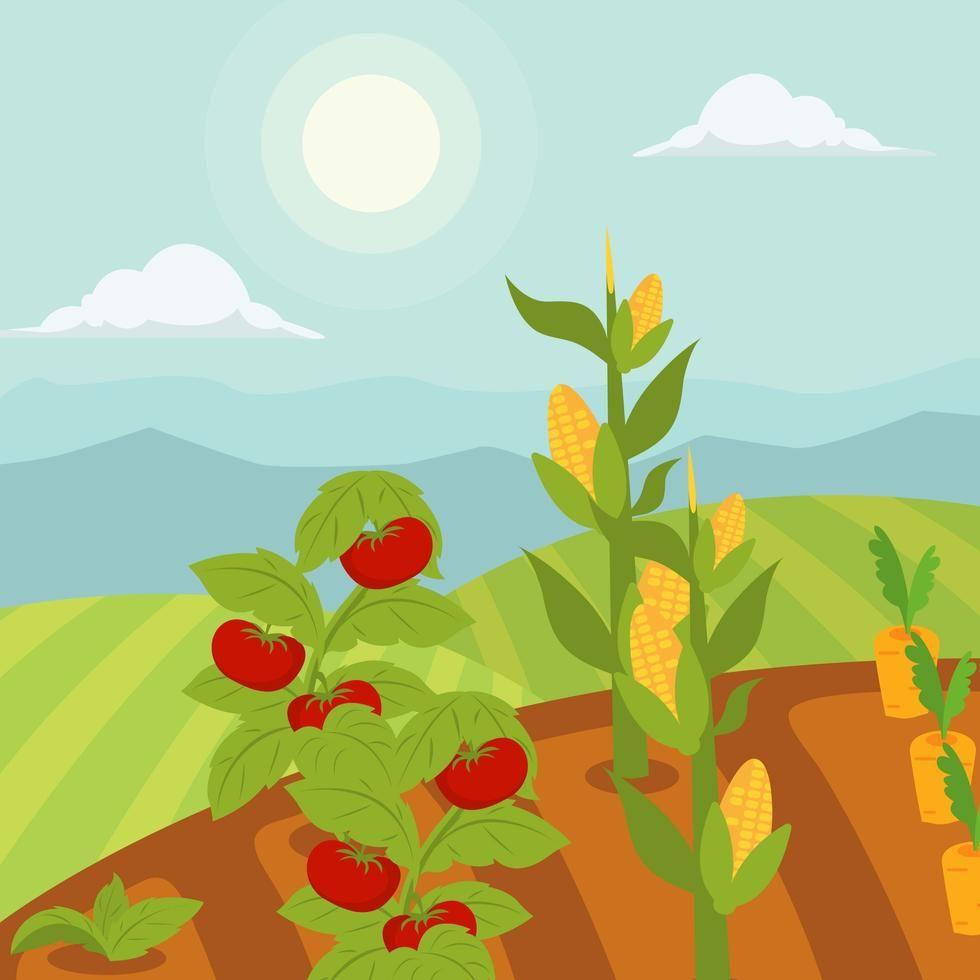 Vegetable Garden Vector Illustration Garden Illustration Herbs Illustration Landscape Illustration