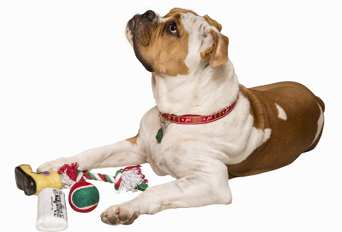 Pet Christmas Stocking for Dogs + Christmas Dog Collar Includes 4 ...