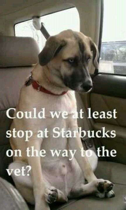 Dog wants to go to Starbucks @Lynda Brown Suglia