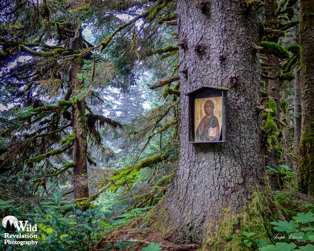 Jesus Icon Tree. A large, old Sitka spruce tree displays a Russian Orthodox icon of Jesus on Spruce Island, Alaska. Photography by Joseph Classen.