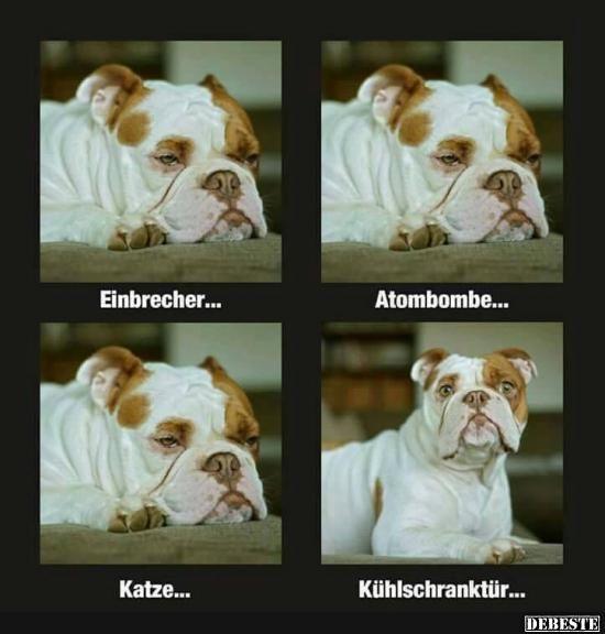 Einbrecher.. | DEBESTE.de, Lustige Bilder, Sprüche, Witze ...