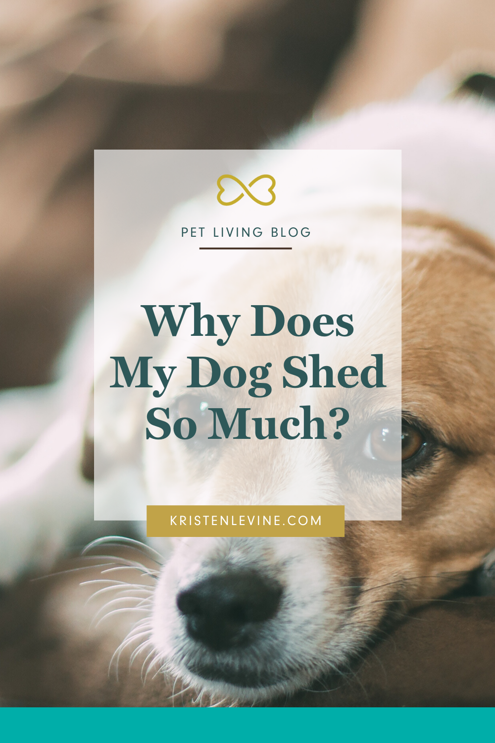 How To Get Your Dog S Shedding Under Control In 2020 Dog Shedding Your Dog Dog Care Checklist
