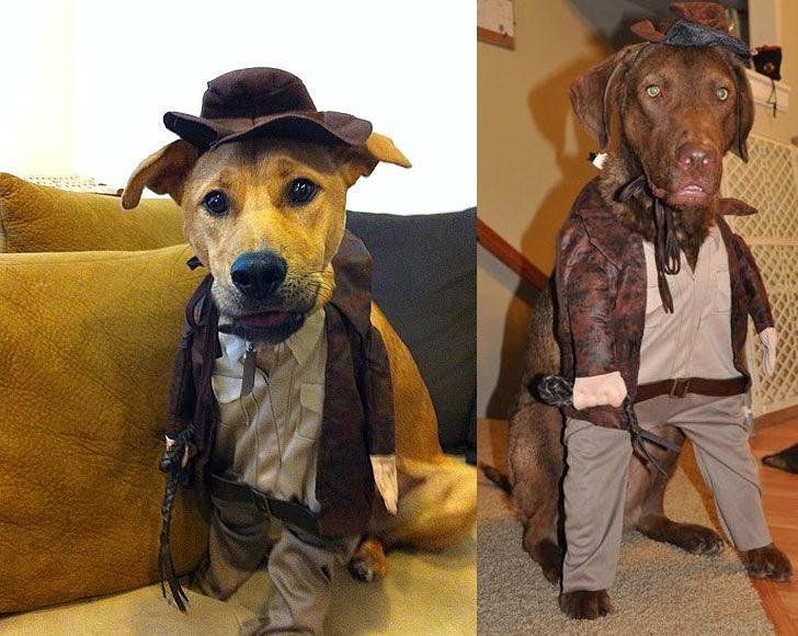 Indiana Jones Dog Costume Indiana Jones Dog Costume Dog Costumes