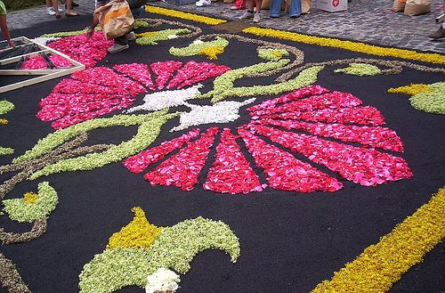 Alfombras de flores - Flower carpets