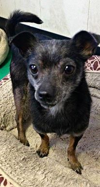 Adopt Timmy On Ny Nj Little Paws Small Breed Dogs In Need Of