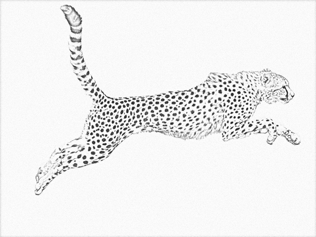 Image Result For Drawing Cheetah Stalking