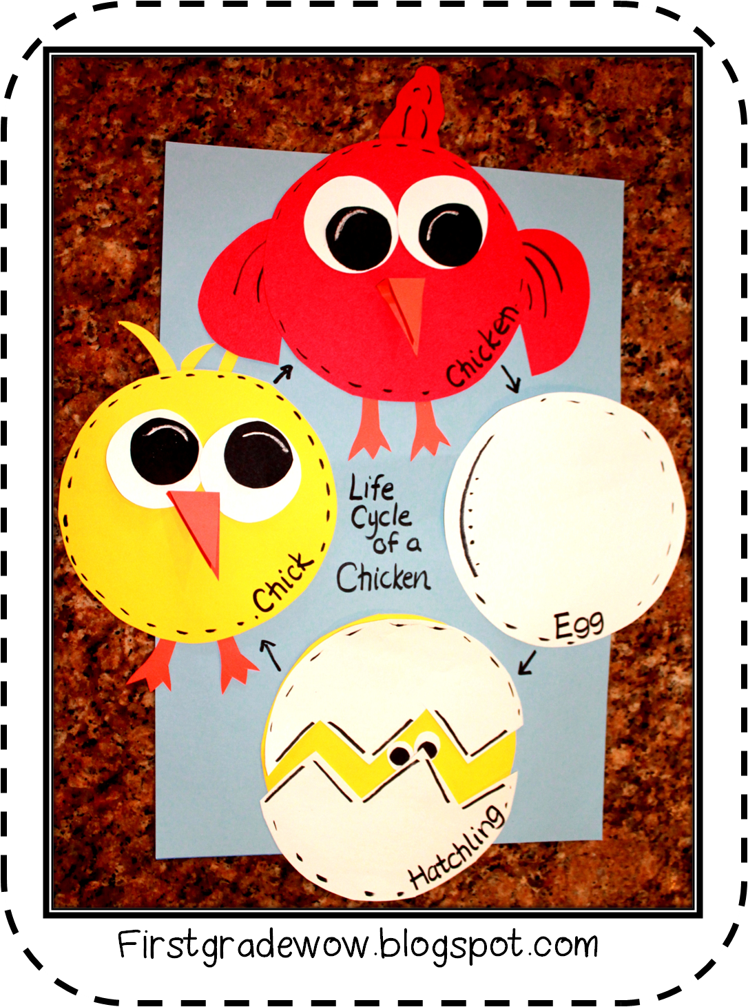 Animal Feet And Chicken Life Cycle With Images