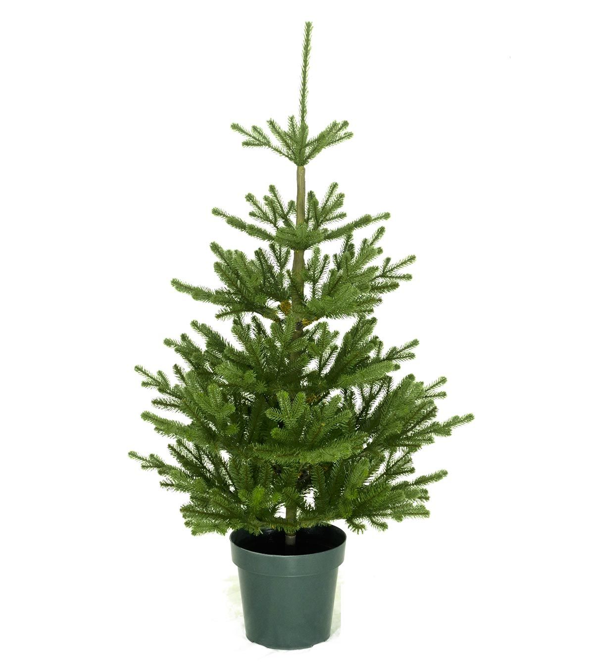 4ft Imperial Spruce Potted Feel Real Artificial Christmas Tree