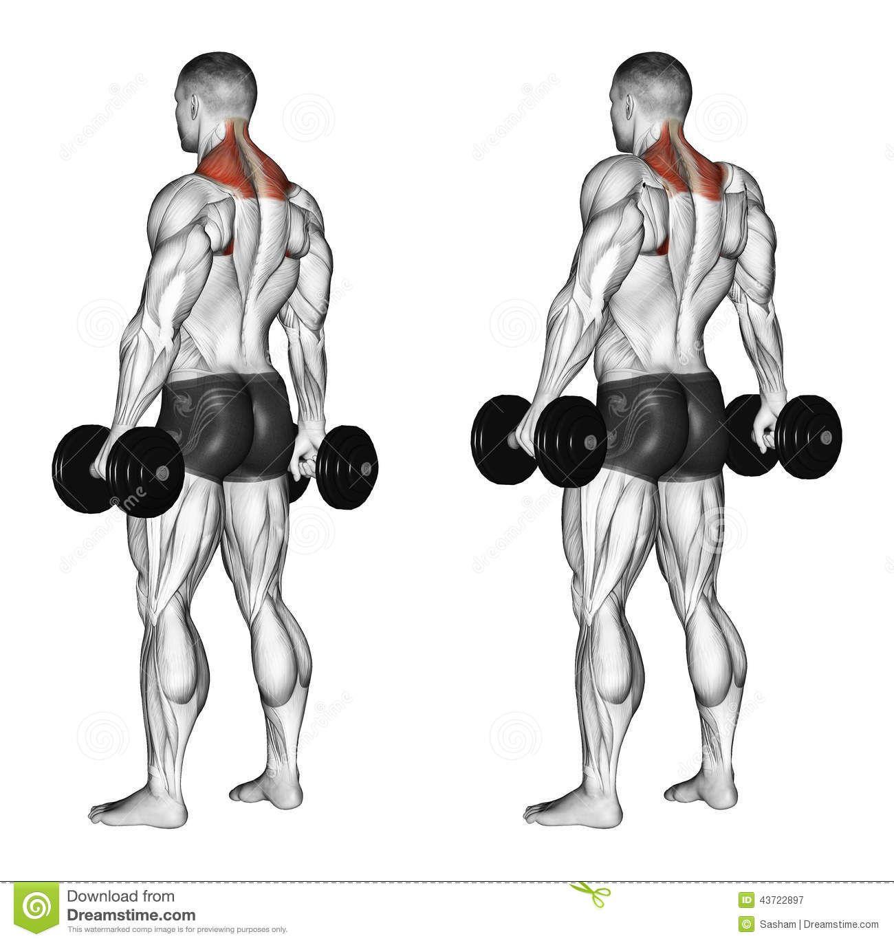 Kettlebell Kickboxingkettlebell: Pin By Mr Liu On Anatomy