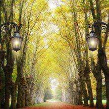 Valokuvatapetti - Alley with Trees