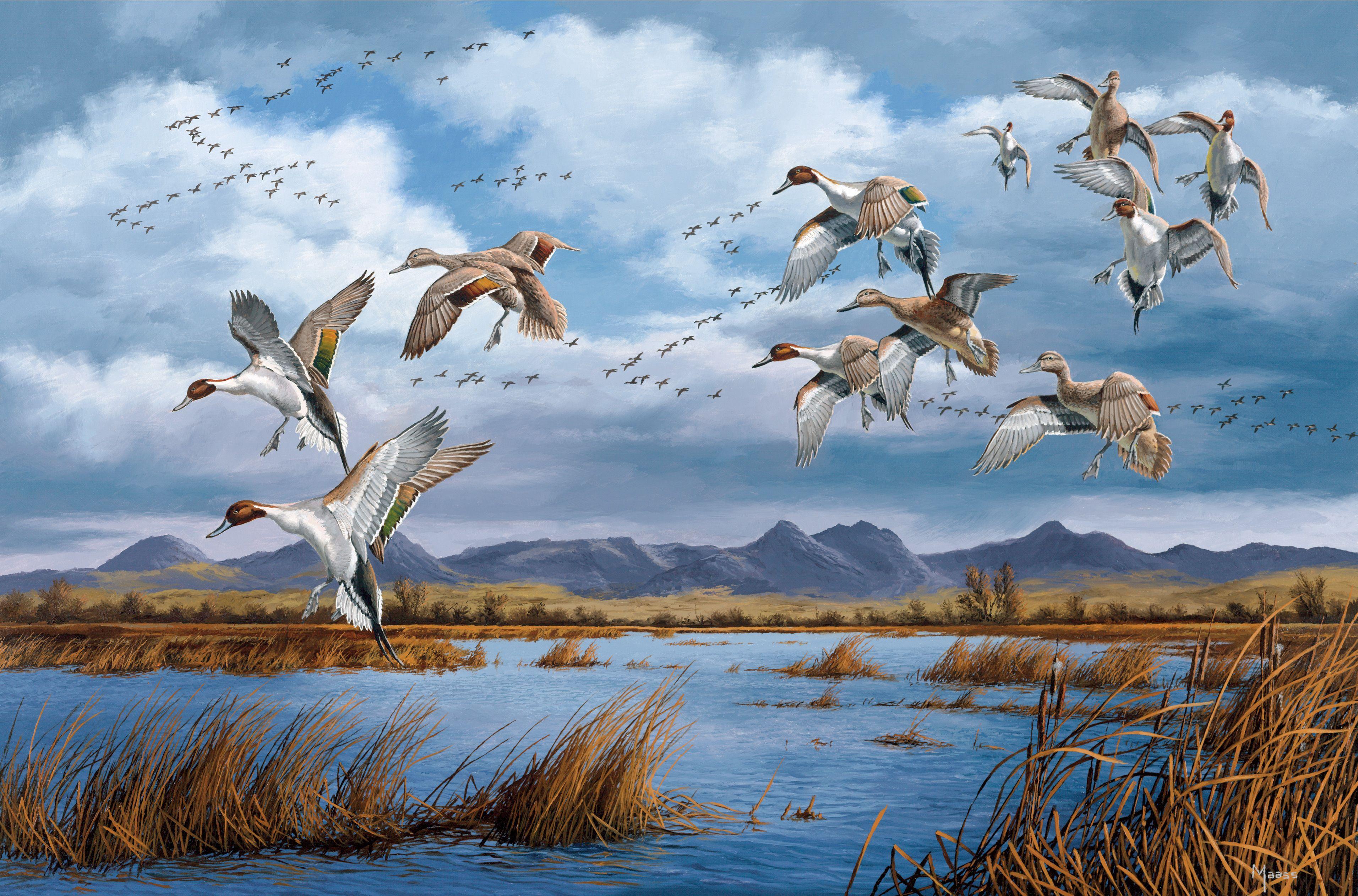Перелет птиц картинки для детей