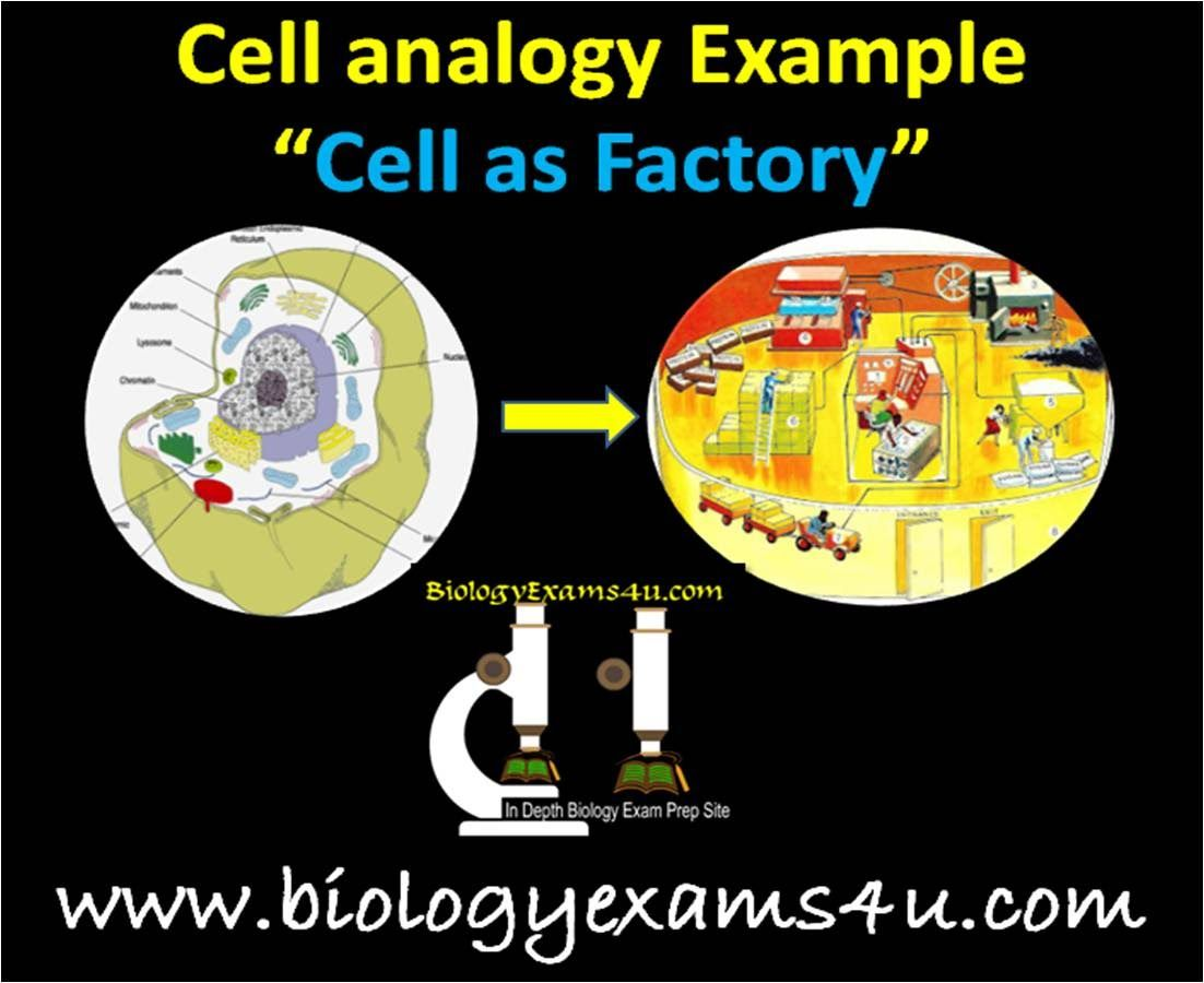 A Simple Video On Cell Analogy Cell As A Factory To Understand