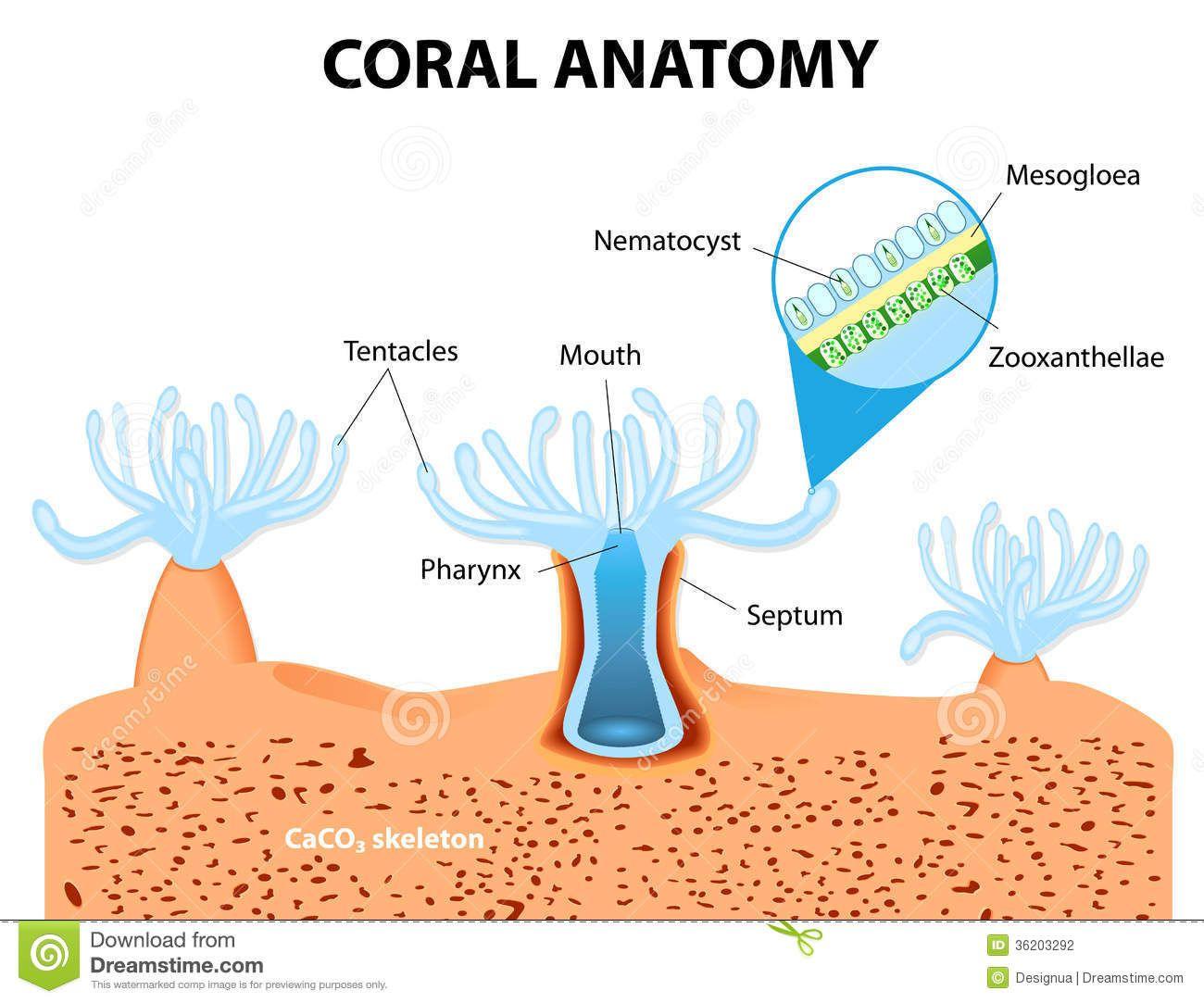 Coral Reef Structure Szukaj W Google Coral Bleaching Marine Biology Coral