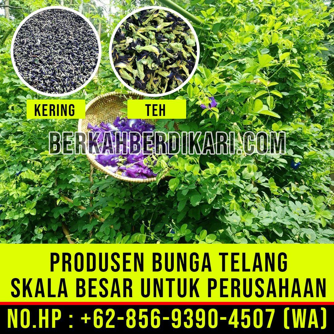 Perusahaan Bunga Telang Ungu Distributor Bunga Telang Ungu Segar Hub 62 856 9390 4507 Wa Outdoor Outdoor Structures Bunga