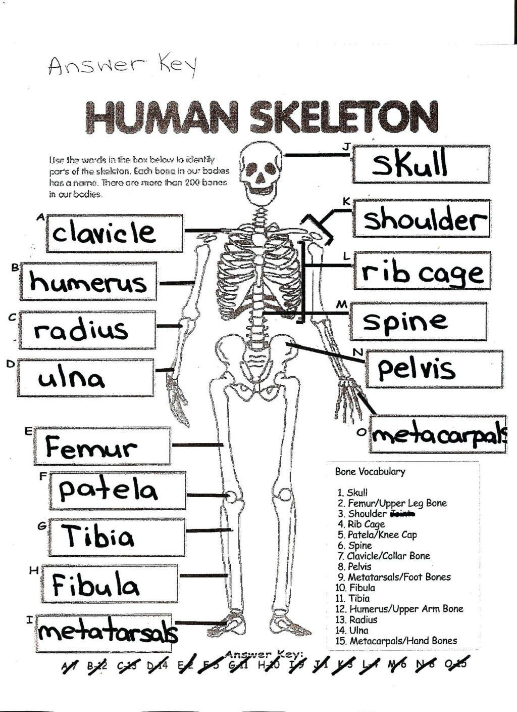 Anatomy And Physiology Coloring Workbook Answer Key Lovely