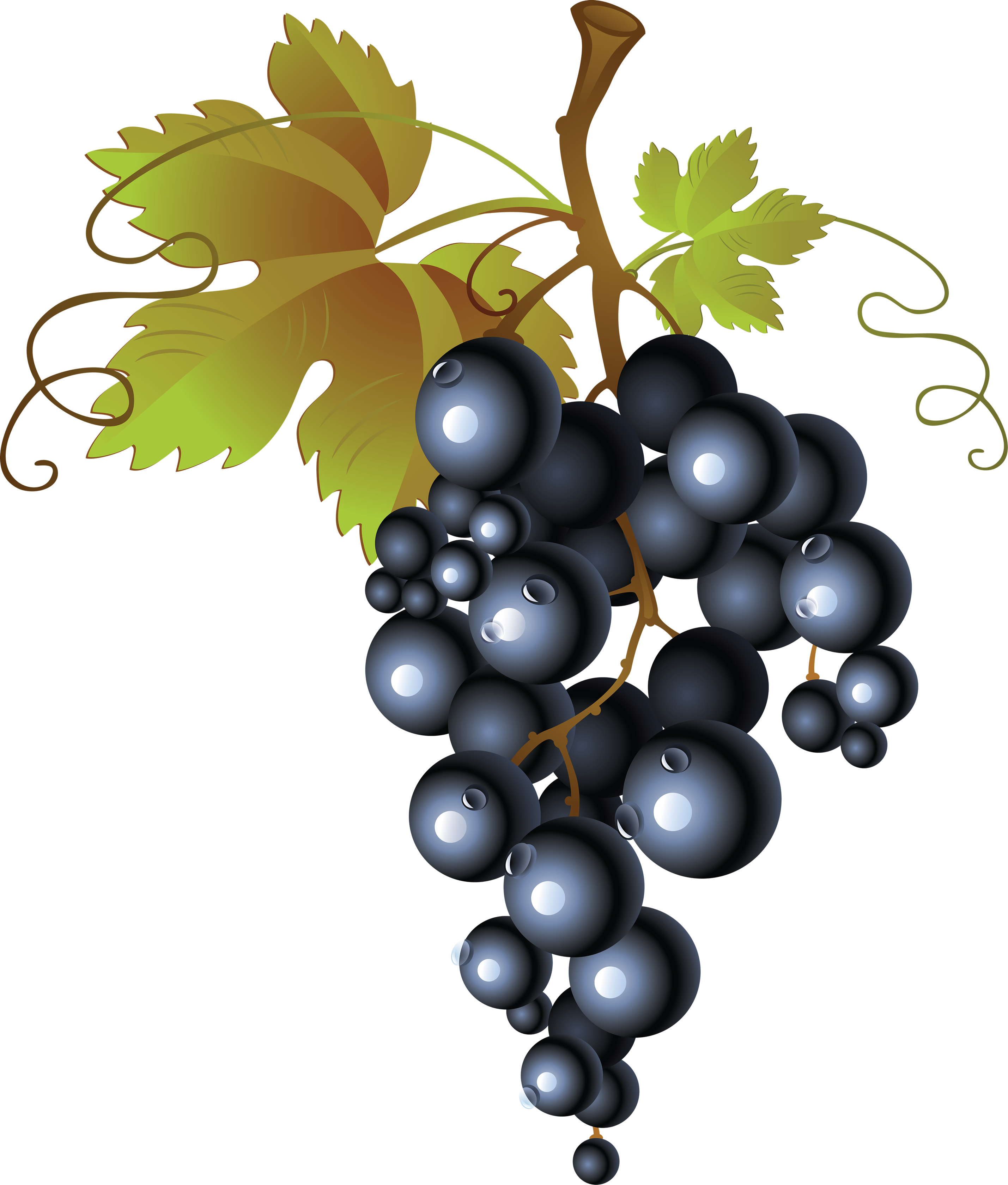 Grape PNG image, free picture download (With images