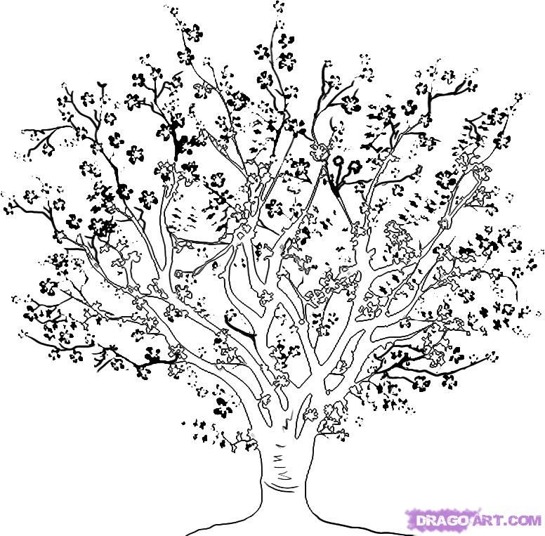 how to draw a cherry tree, step by step, trees, pop culture, free ... - Cherry Blossom Tree Coloring Pages