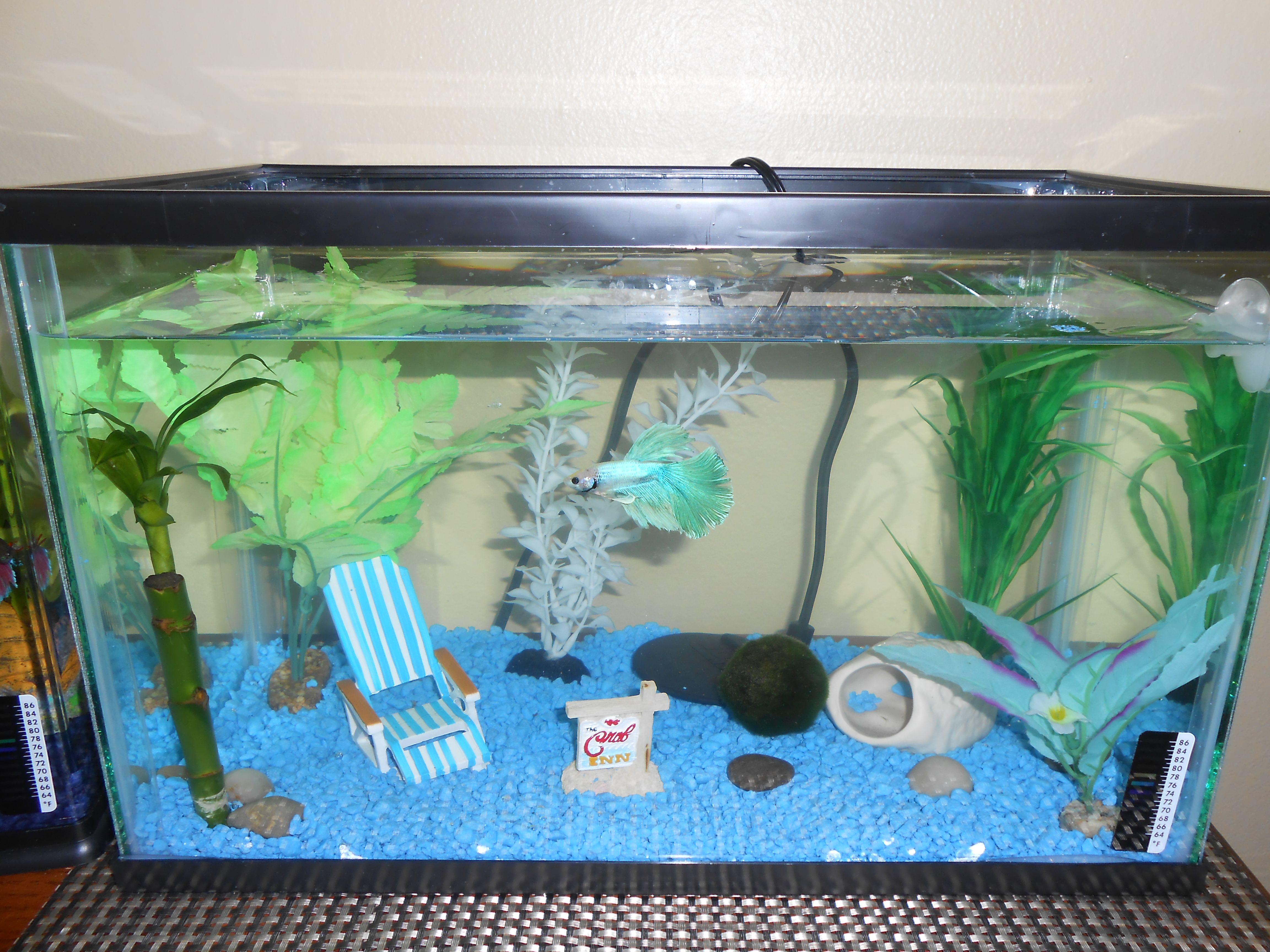 Fish tank toilet - Beach Themed Betta Home Bettaaquariumknowledgefish