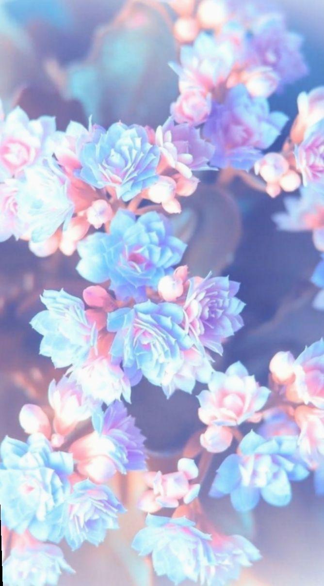 ✔ Wallpaper Blue Flowers Inspiration #Photo #sky #wallpaper#blue #flowers #inspiration #photo #sky #wallpaper #blueflowerwallpaper