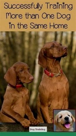 Garmin Dog Training Collar Dog Training Upper East Side Dog