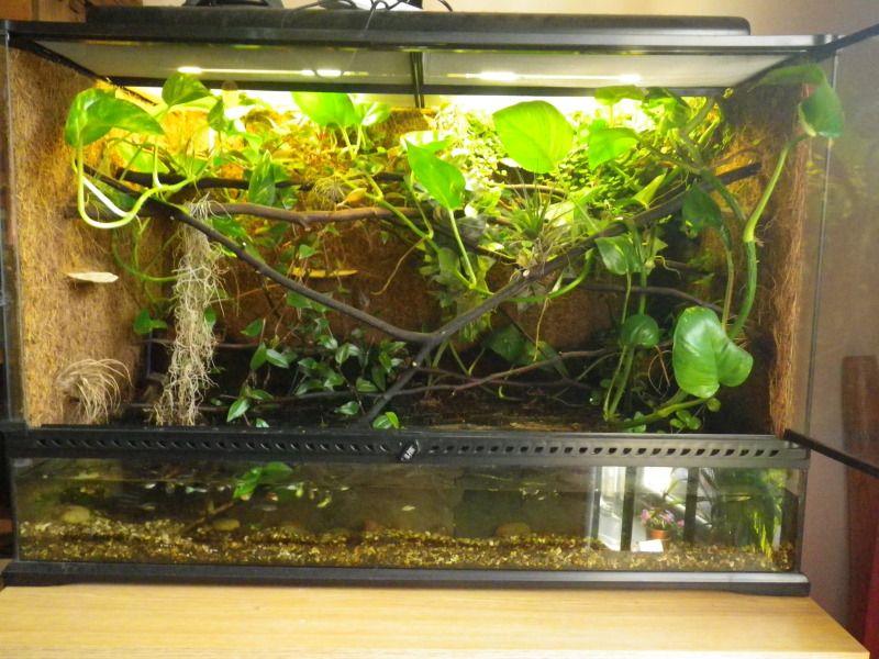 Mantis Habitat Indoor Orchids Vivarium Orchid Terrarium