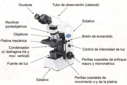 microscopio-optico   lo mehor visto   Pinterest   Microscopio optico ...