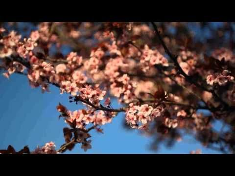La primavera en Chulilla.  www.chulillaslow.es