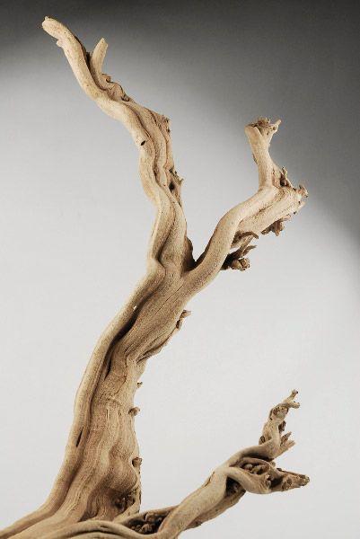 Ghost  wood